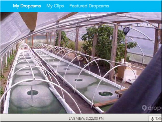 Laptop screen showing live video webcam from inside the greenhouse, July 2013